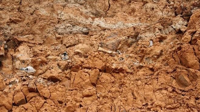 1 milyar yıllık fosil keşfedildi!