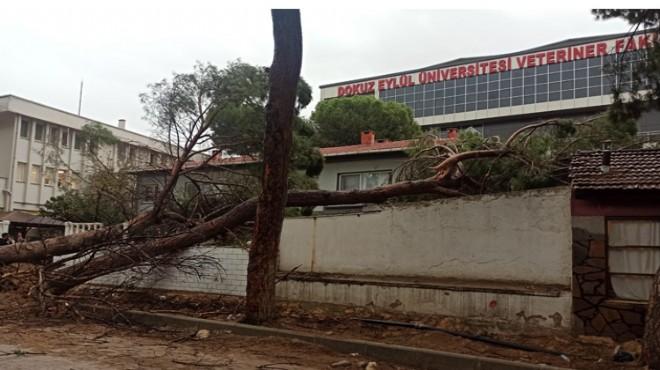 AK Partili Başkan'dan Büyükşehir'e 'ağaç' tepkisi