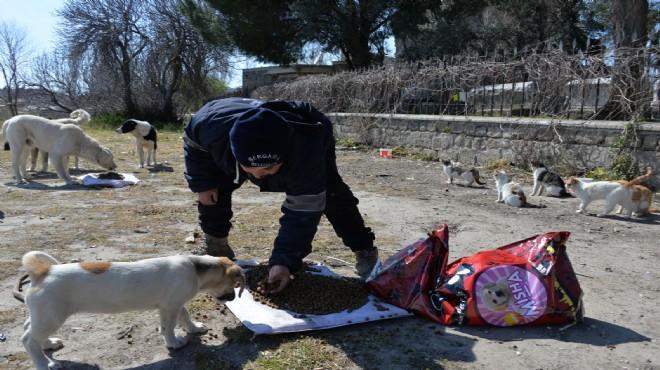 Bergama'da sokak hayvanları unutulmadı!