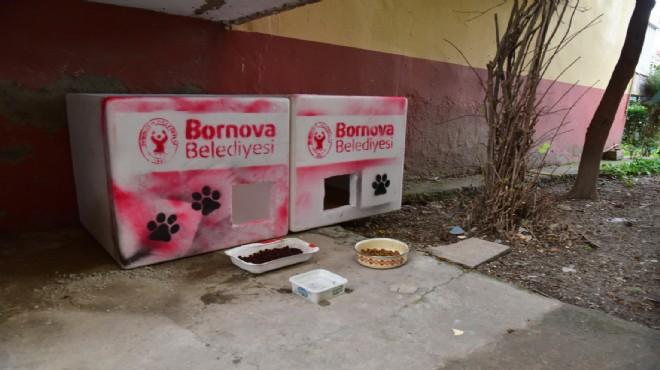 Bornova'da belediyeden 'can dostu' hizmet