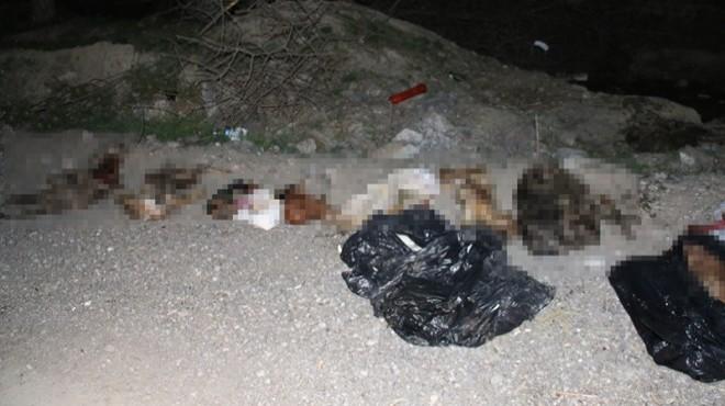 Çöp poşetlerinde 30'dan fazla ölü köpek bulundu