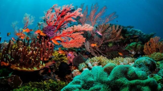 Mercanlar da küresel ısınma kurbanı!