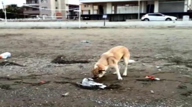 Sokak köpeği, ölen martıyı son yolculuğuna uğurladı!