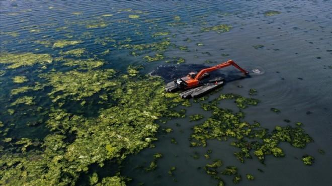 Soyer'den deniz marulu açıklaması: Müsilaj tehdidi var mı?